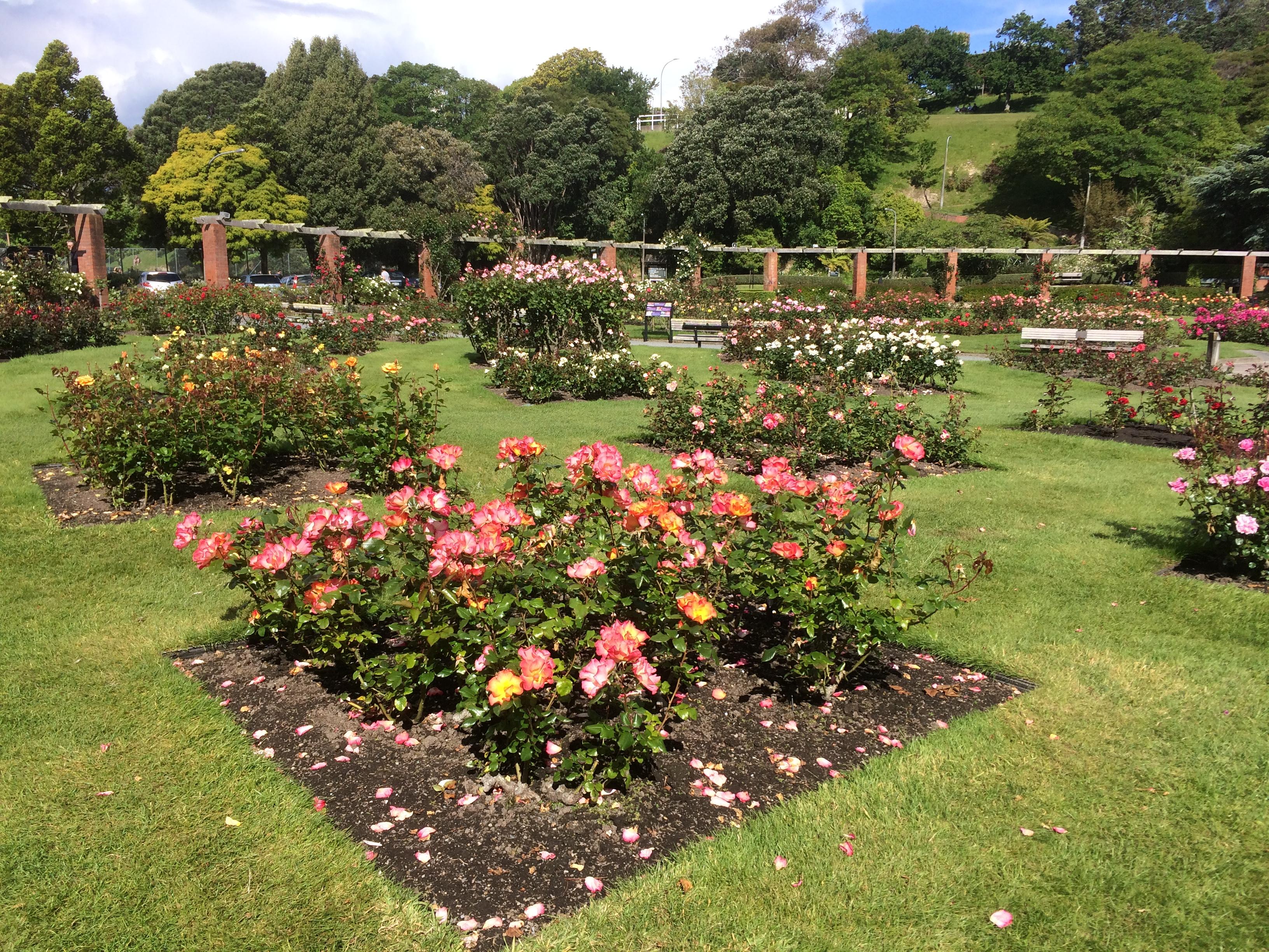 Lady Norwood Rose Garden.