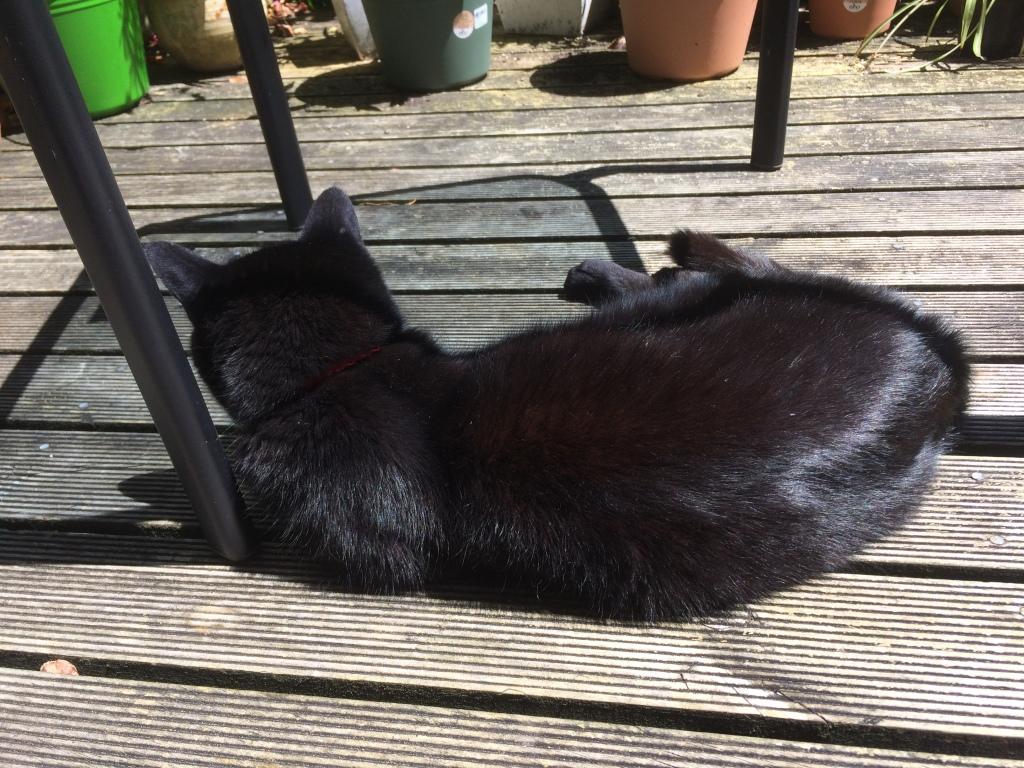 Charlie Black Cat